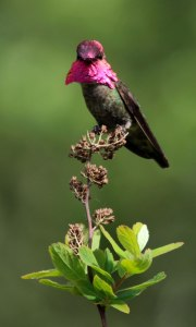 annas male by Peter Pearsall