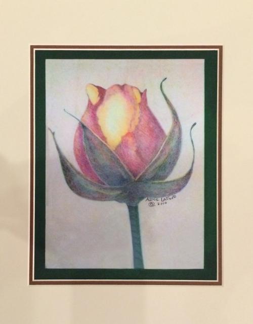 Colored Pencil by Alice LaFond-1