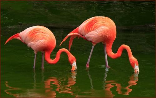 KimCucTran_YAAP_FlamingoPair