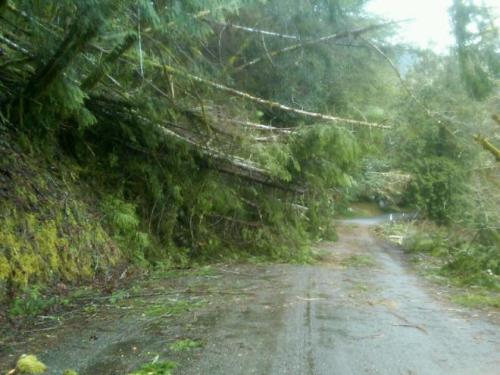 ODOT trees down storm damage