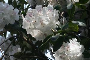 flowers connie hanson garden