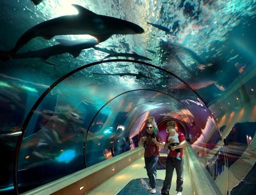 Aquarium's Passages of the Deep exhibit