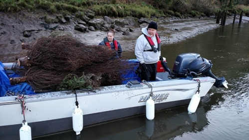 Volunteers placed 175 discarded Christmas trees in the Yaquina River on Feb. 22 to provide young salmonids cover from cormorants and other predators. (Photo by Larry Coonrod)