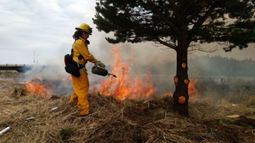 Firefighter Gabriella Cook uses a drip torch to ignite a burnout during a training exercise next to the Alsea Bay on June 28. Cook is a volunteer with Central Oregon Coast Fire & Rescue and a paid summer intern with the Newport Fire Department. (Photo by Larry Coonrod)